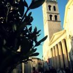 minerva-olivo